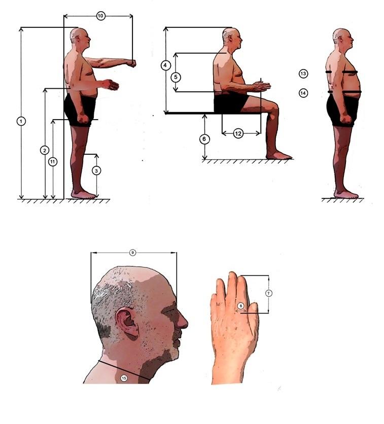 Figurinen mit einer Auswahl der gebräuchlichsten ergonomischen Körpermaße